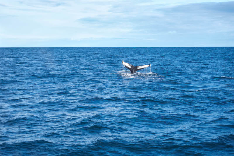 Husavik Whale watching