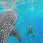 SWIMMING WITH WHALE SHARKS OSLOB CEBU