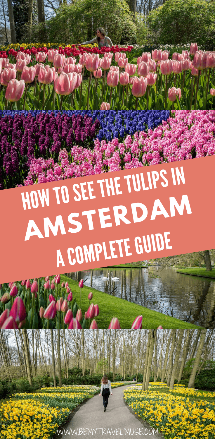 A visit to the Keukenhof is not to be missed if you find yourself in Amsterdam between late March and mid-May. Click to read a full guide to seeing the beautiful tulips in Amsterdam.