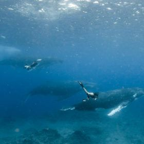 How to Swim with Whales in Tonga